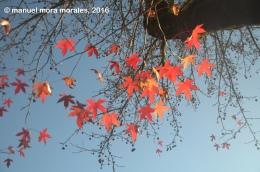 El invierno veranea: pocabroma